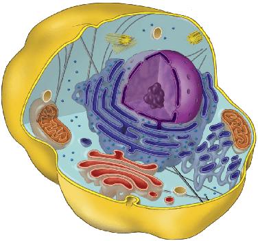 Клеточный метаболизм